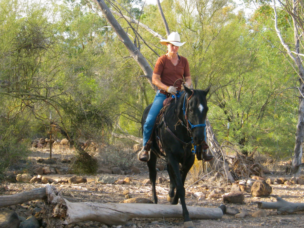 "AQHA mare ""Sheza Tic Nac"" shows she can do something!"