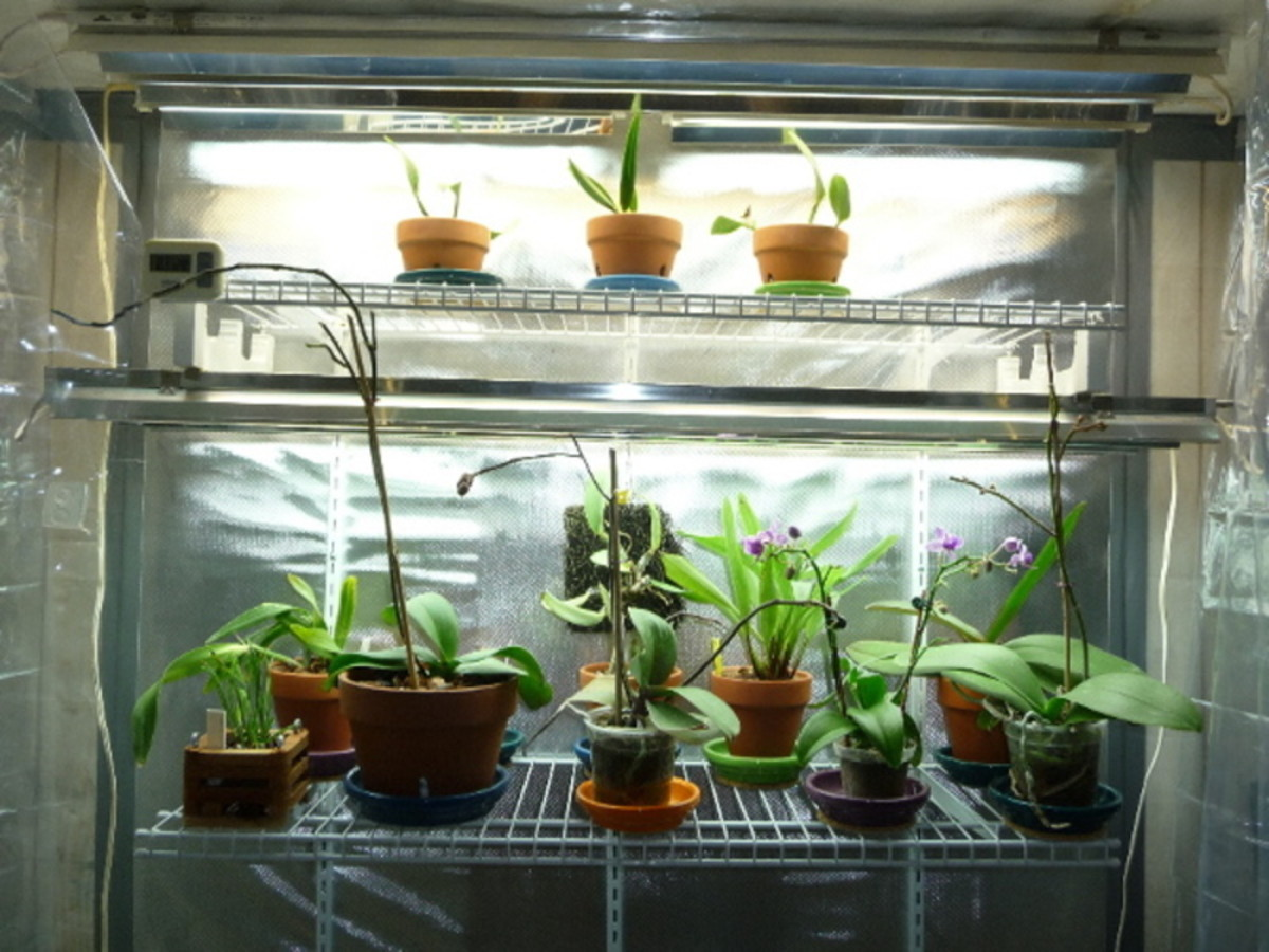House Plants inside Indoor Grow Tent
