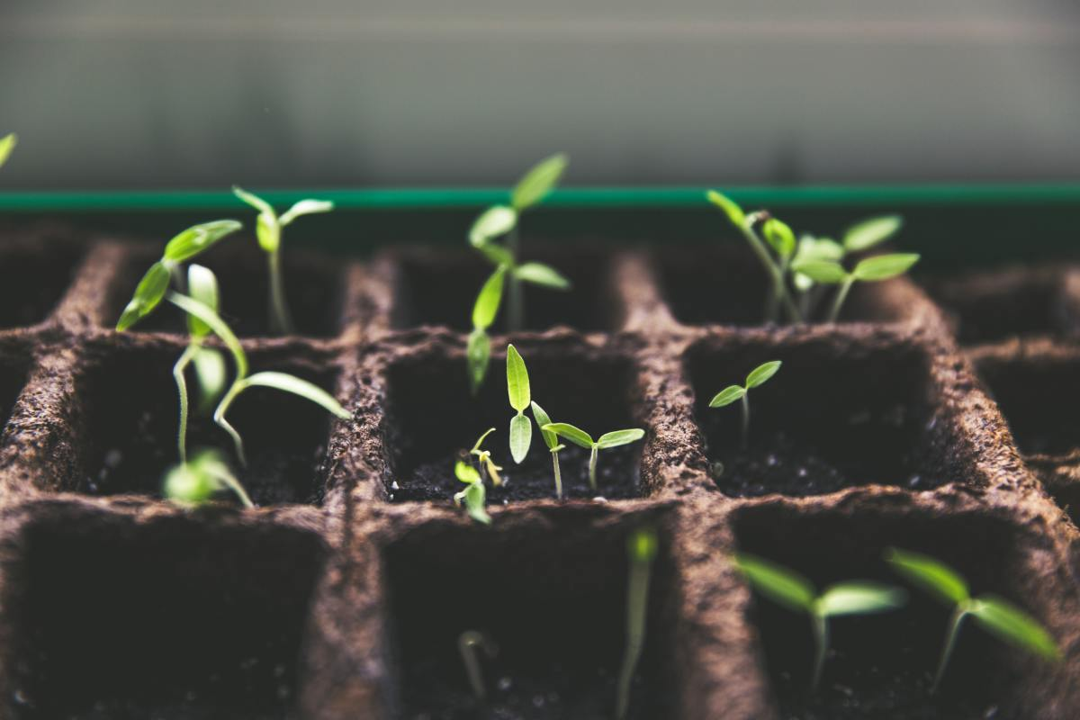 Potassium helps fight disease and promotes vigorous growth in your seedlings and mature plants.
