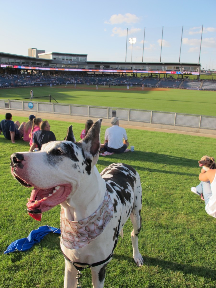 how-to-take-your-dog-to-a-major-league-baseball-game
