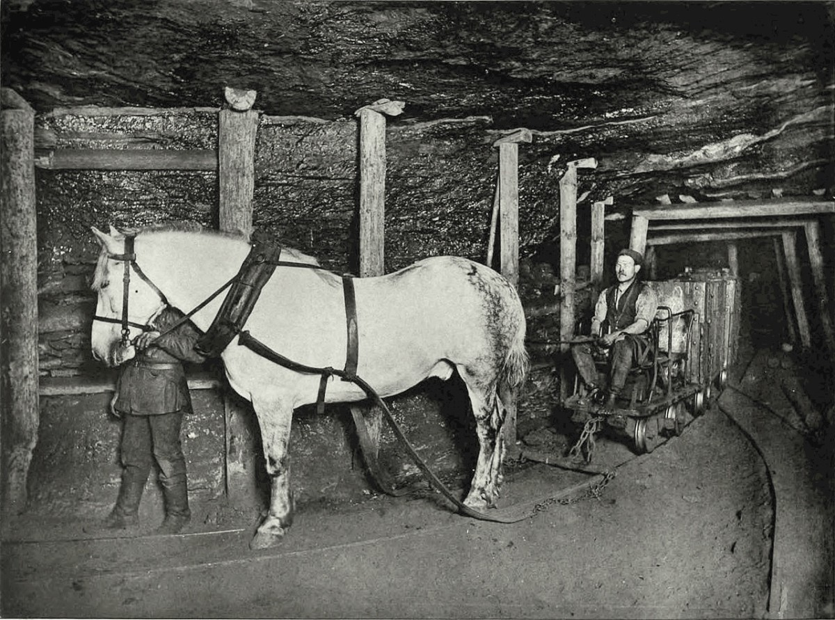 A pit pony photo from 1894