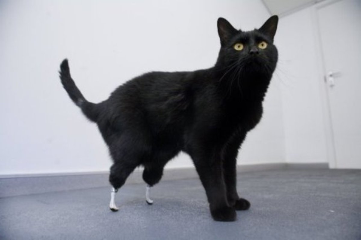 Animal with Prosthetics