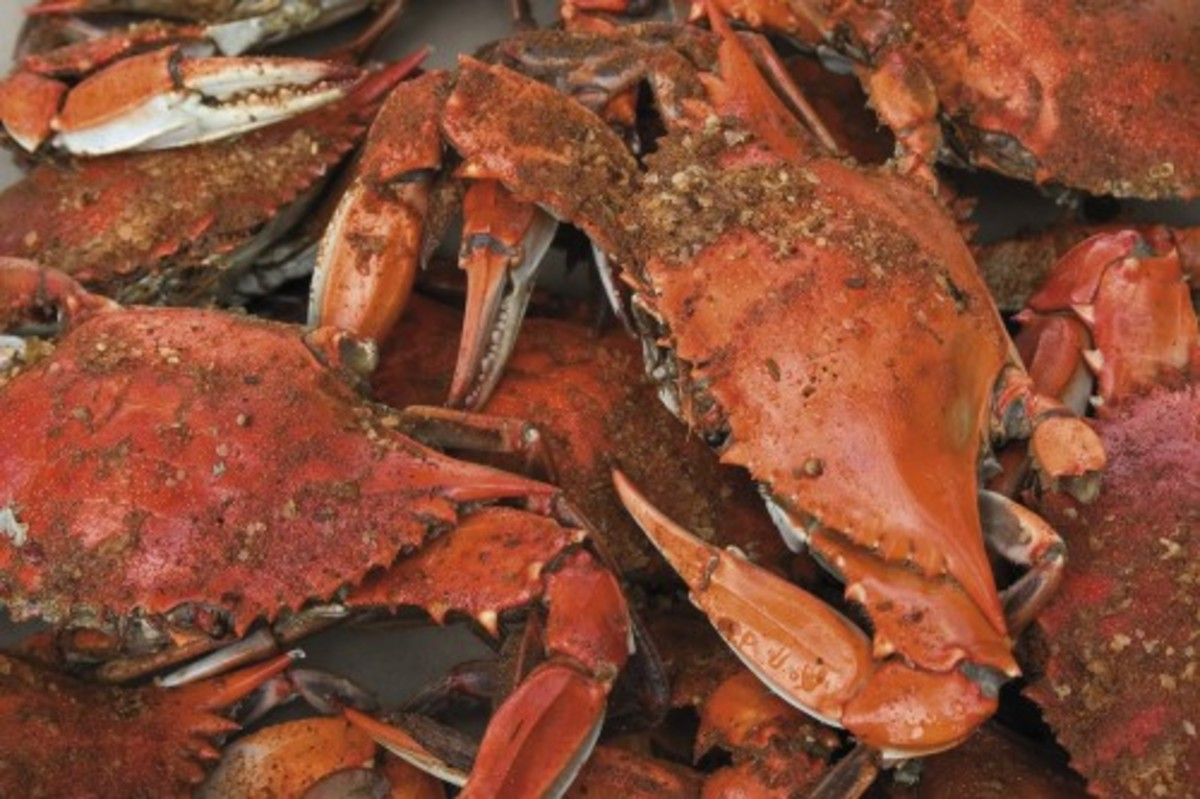 How to Cook Maryland Style Blue Claw Crabs