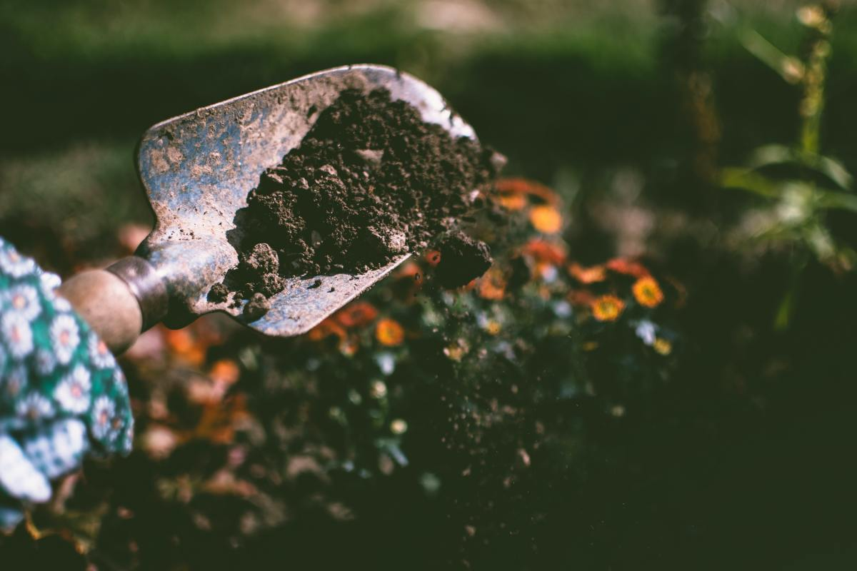 Test your soil to learn its nutrient levels before spending money on unnecessary fertilizers and soil amendments.