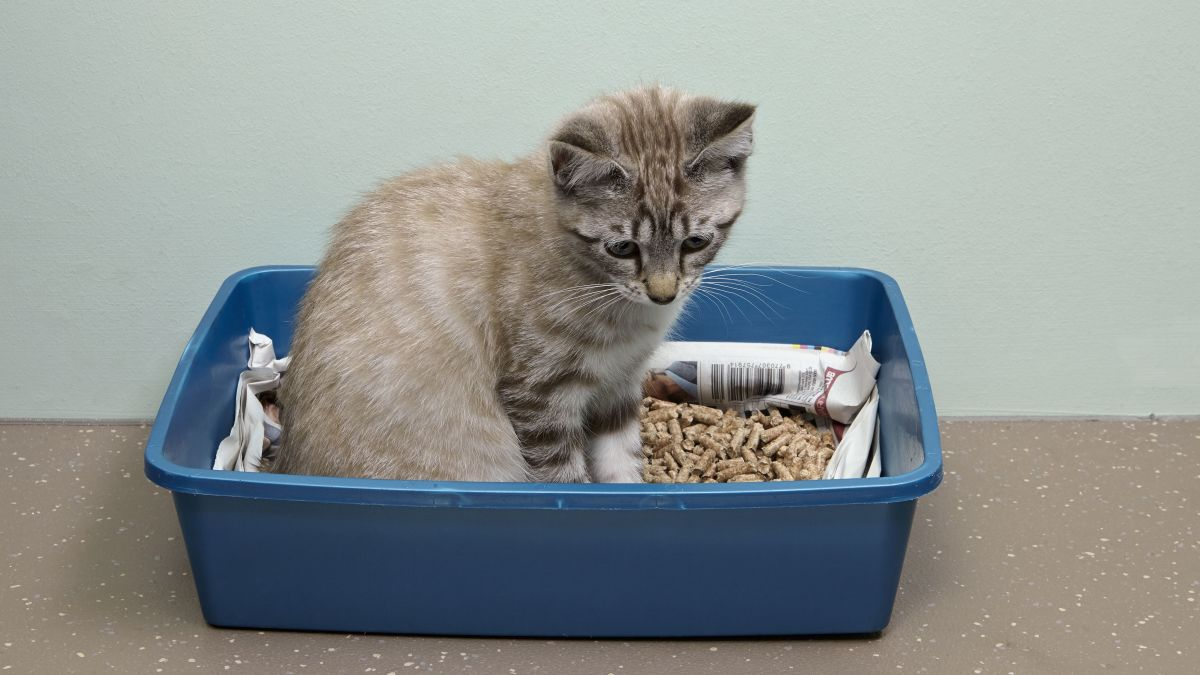how-to-train-a-kitten-in-7-steps