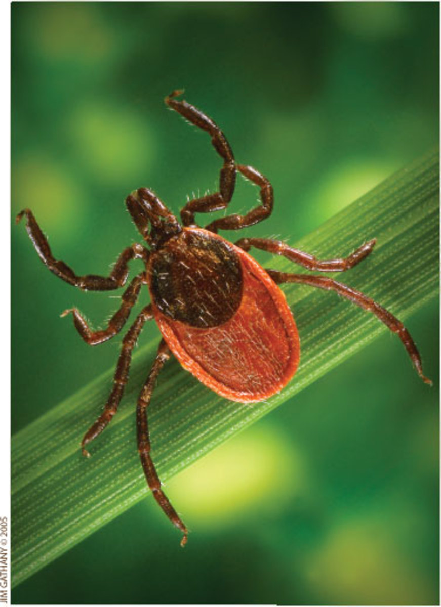 Natural Tick Remedies for your Home, your pet and in your Yard