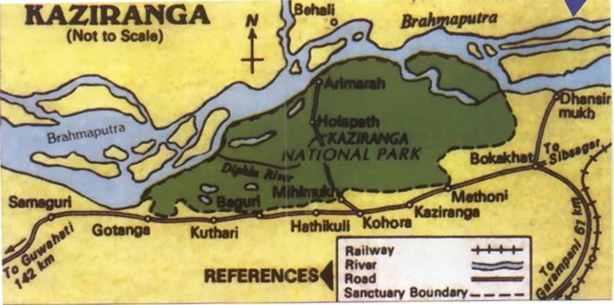 visiting-the-kaziranga-world-heritage-forest-reserve-in-indian-assam
