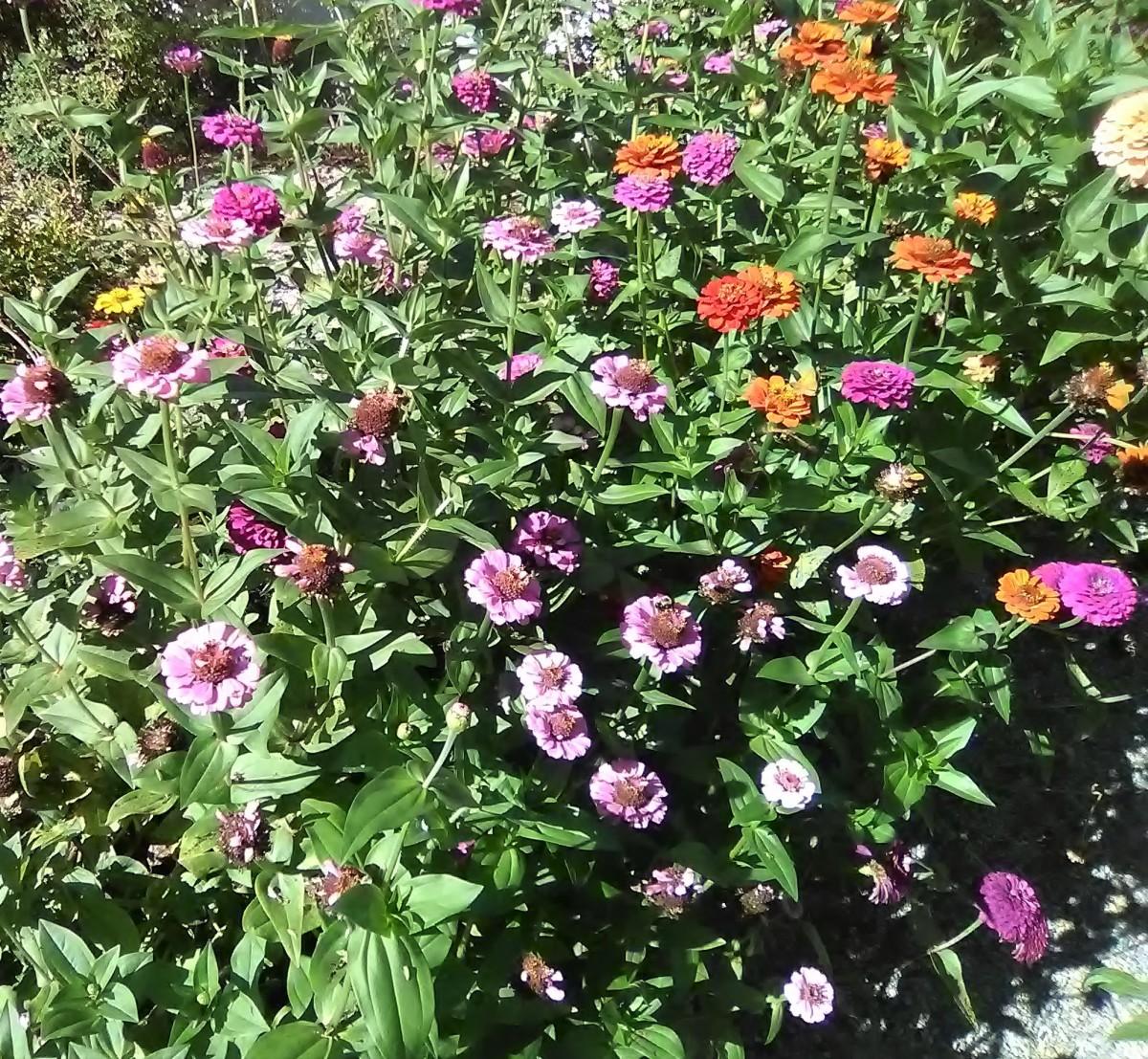 So Many Flowers; So Many Colors