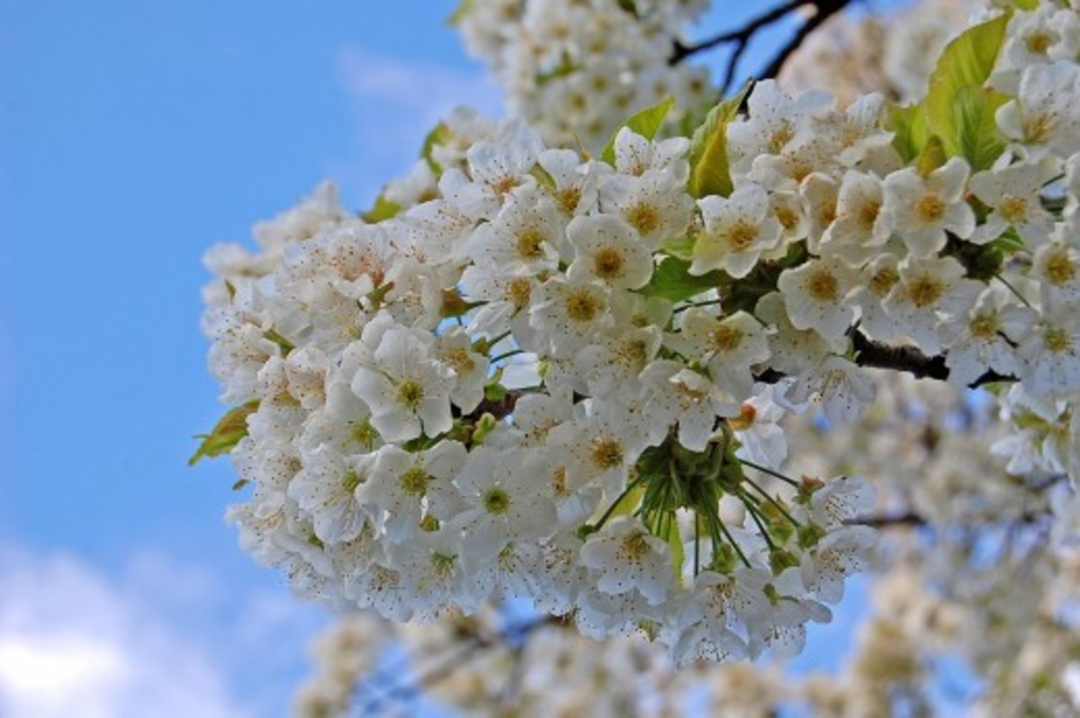 Beautiful Southern Trees and Flowers