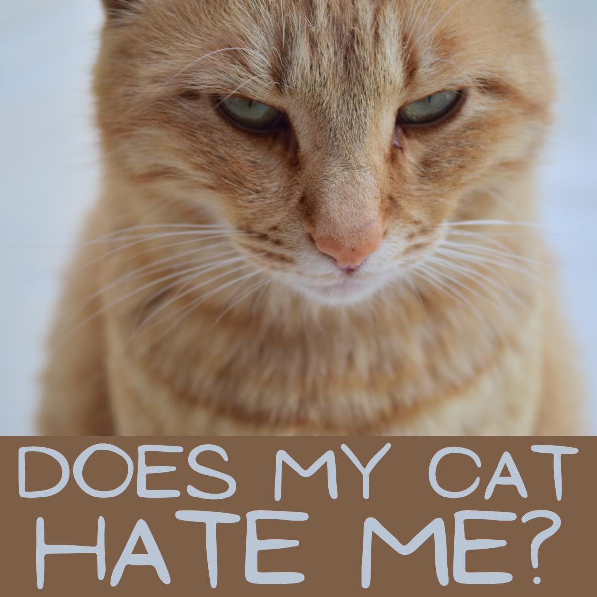 Does your cat hate you? A list of signs to look for.