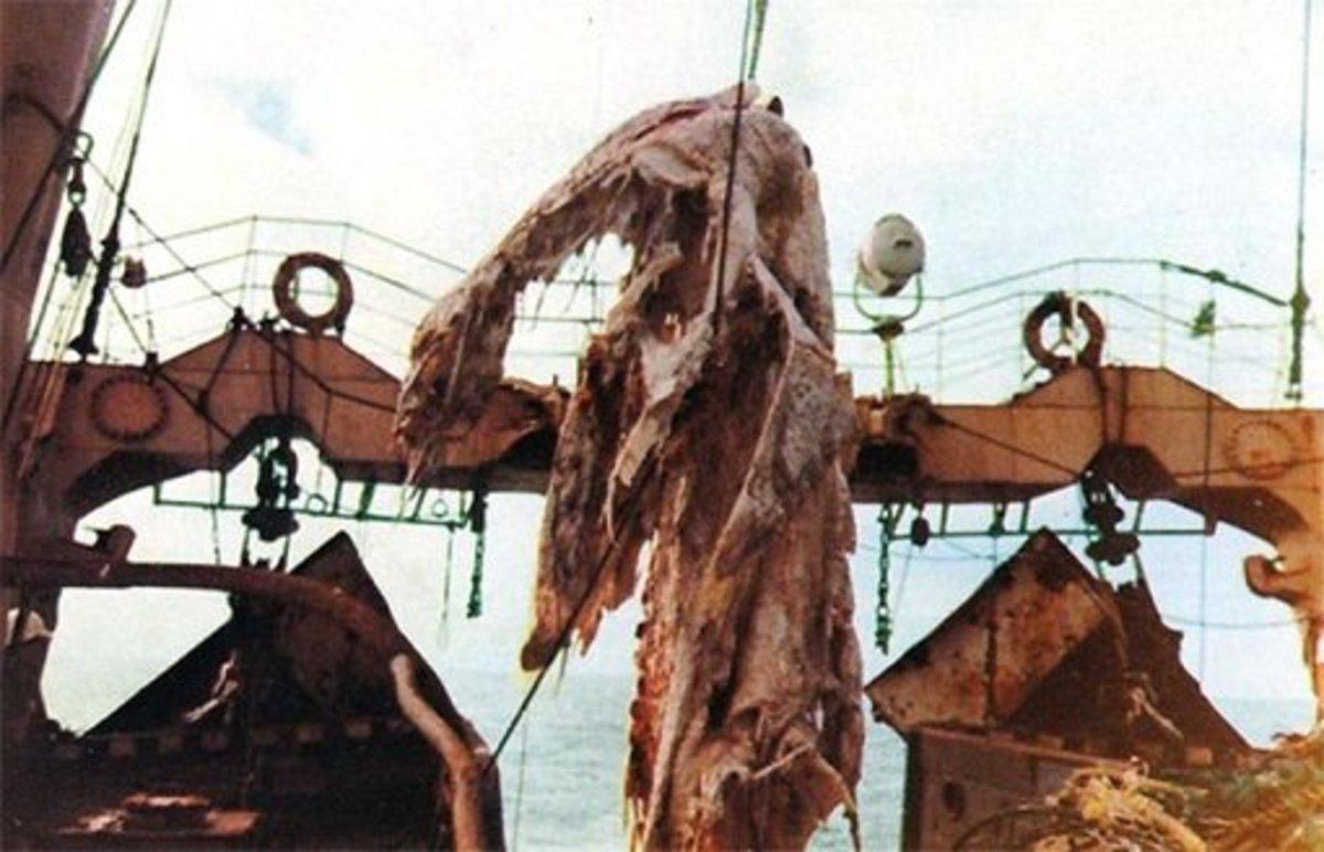 revisiting-the-zuiyo-maru-sea-monster
