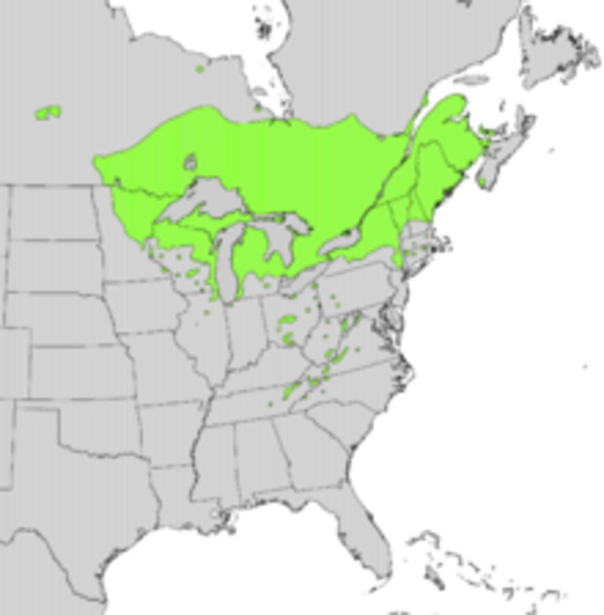 NORTHERN WHITE CEDAR NATURAL RANGE