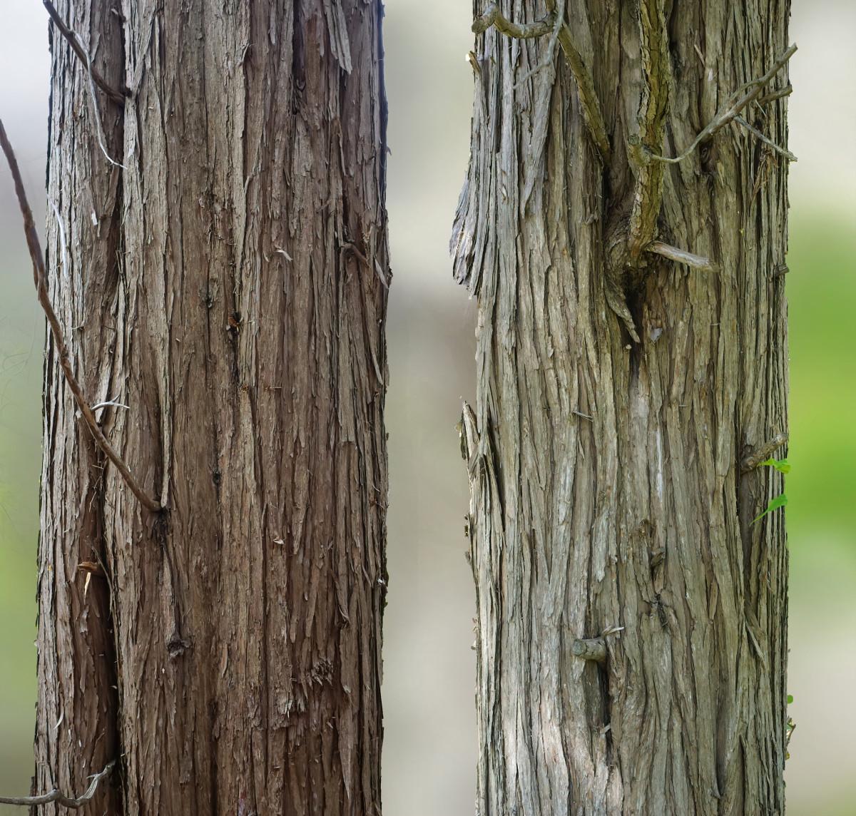 EASTER RED CEDAR TREE BARK