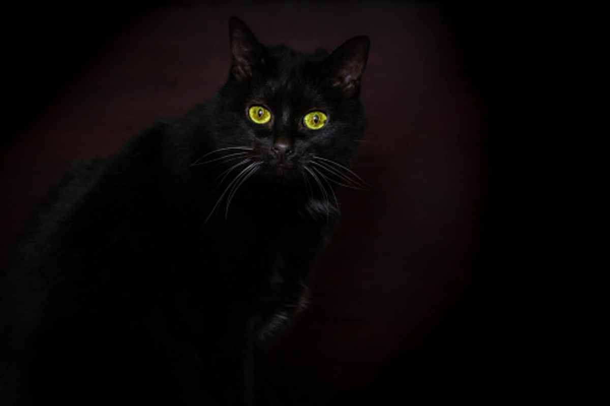 7-superstitions-about-cats