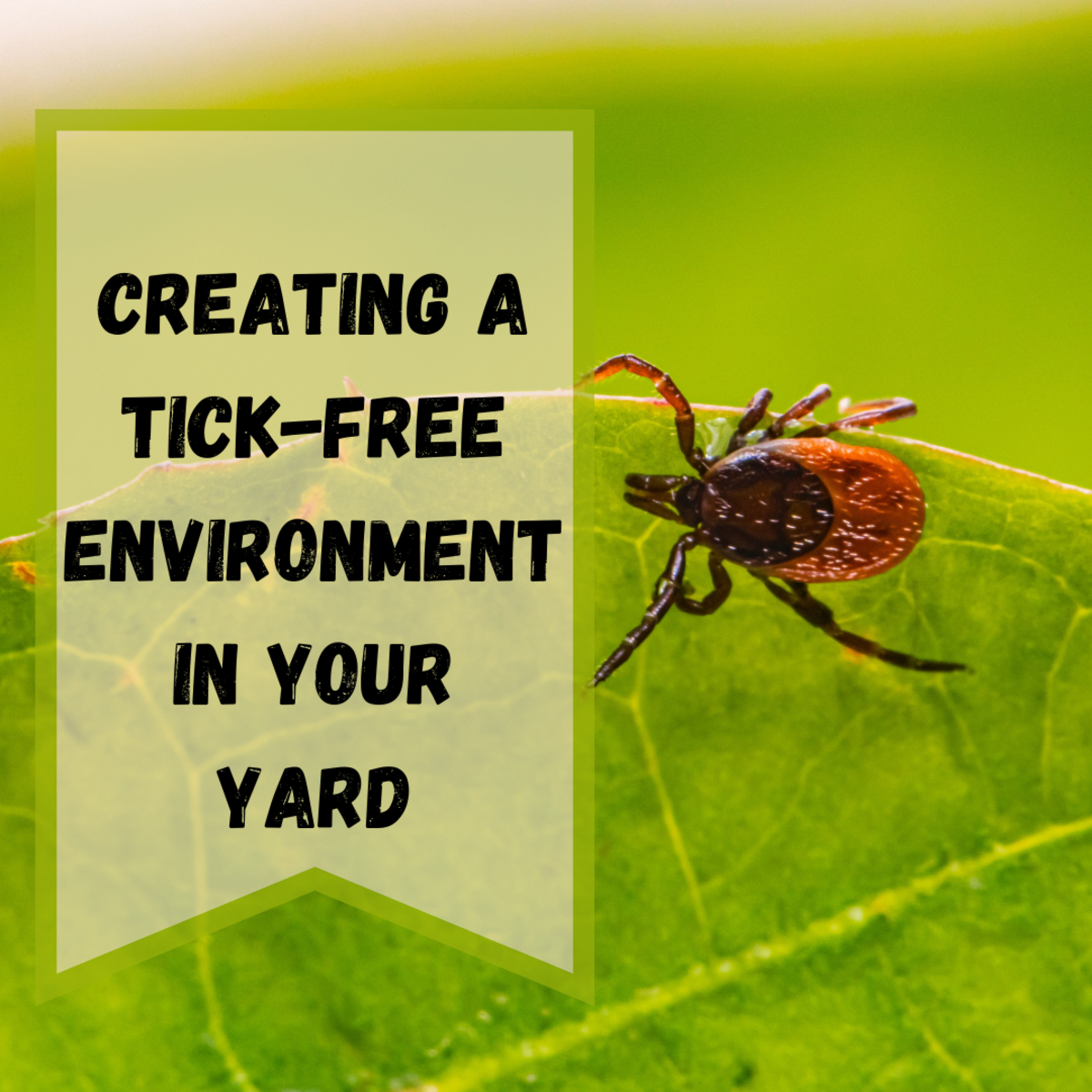 Tips For Designing a Tick-Free Environment For Your Yard
