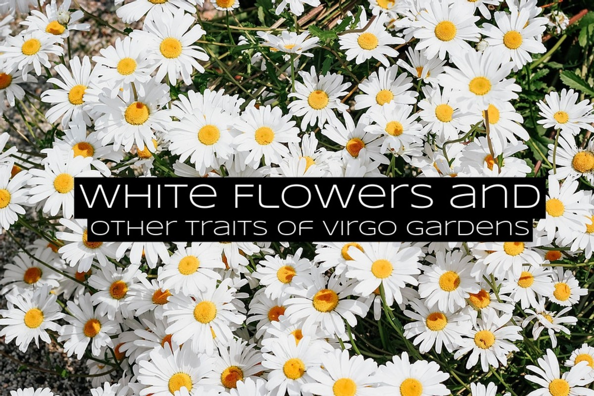 Flowers for a Virgo garden should be simple, easy to maintain, and small rather than big. The best colors for flower petals are white, yellow, and brown.