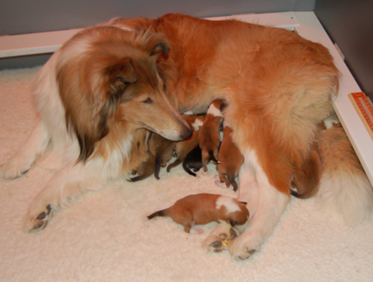 Where do newborn kittens go to the bathroom - Newborn Puppies What You Need To Know Hubpages