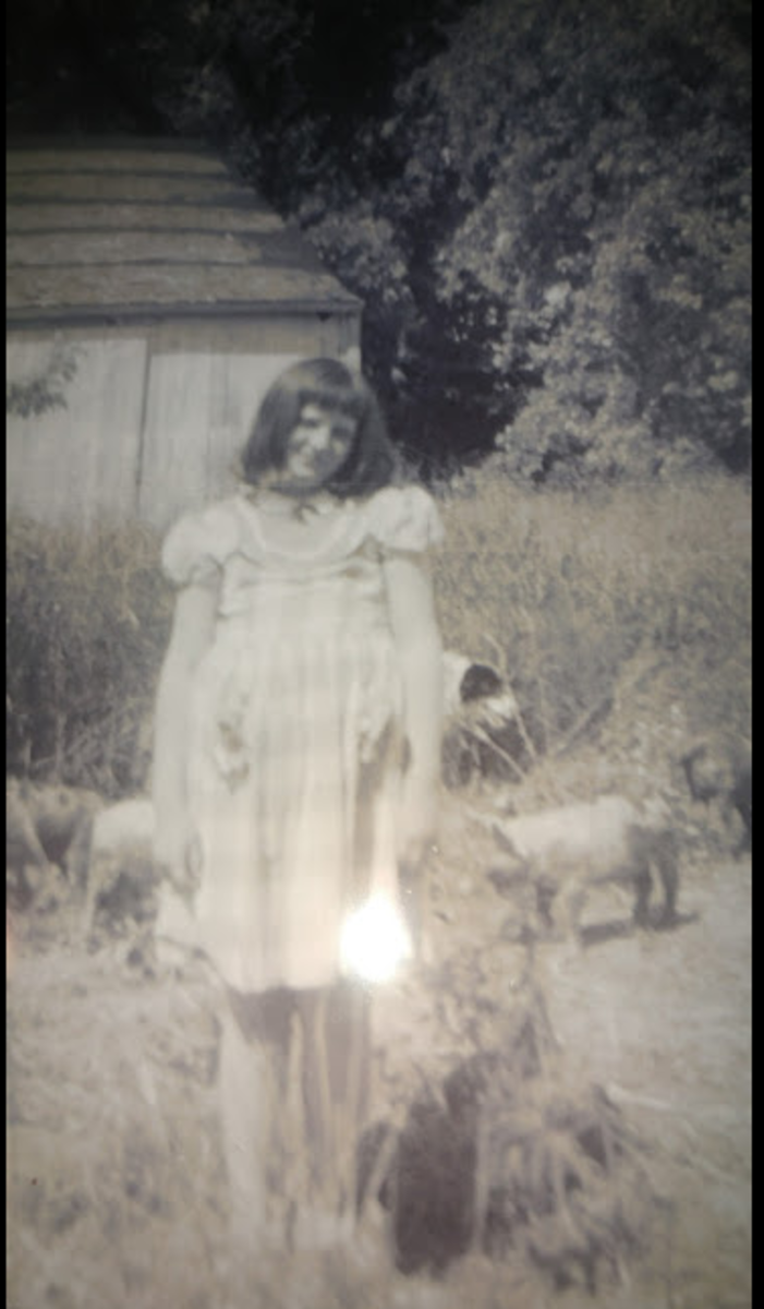 Connie with pigs on our farm.  Taken around 1969 or 1970