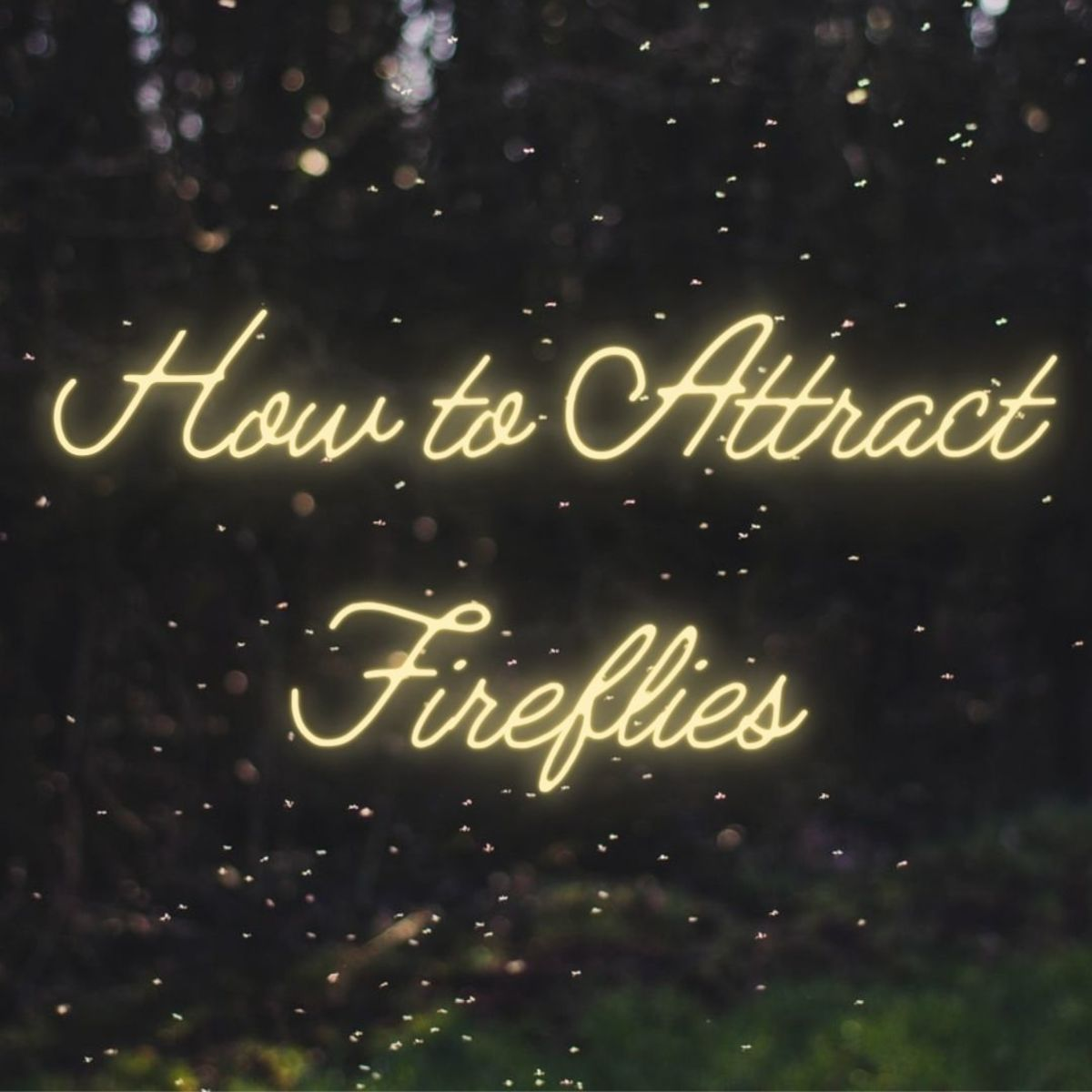 This article will show you how to attract fireflies to your yard without contributing to their dwindling populations.