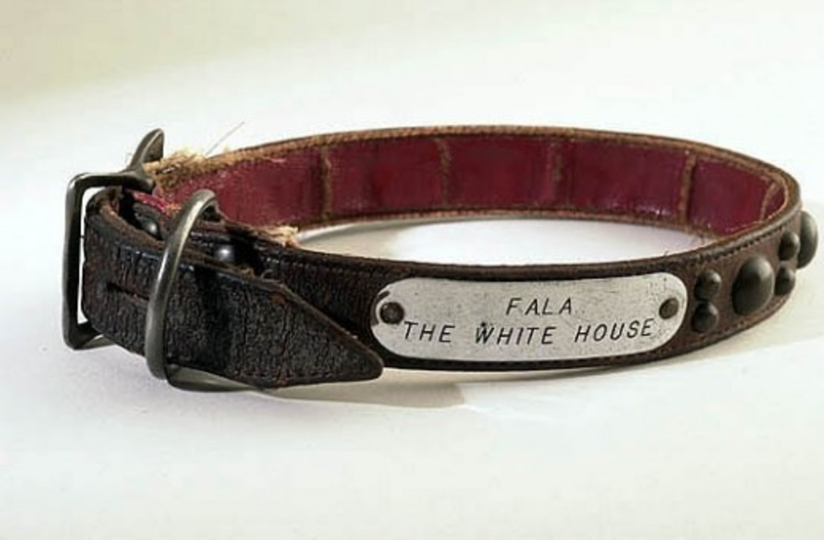 """Leather dog collar with silver tag engraved with """"Fala, the White House."""" National Park Service [public domain]"""