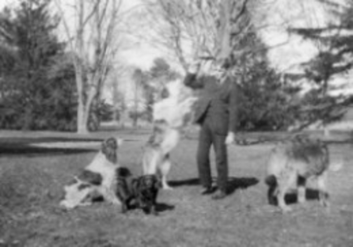 Franklin D. Roosevelt with four dogs in Hyde Park, 1901 [public domain]