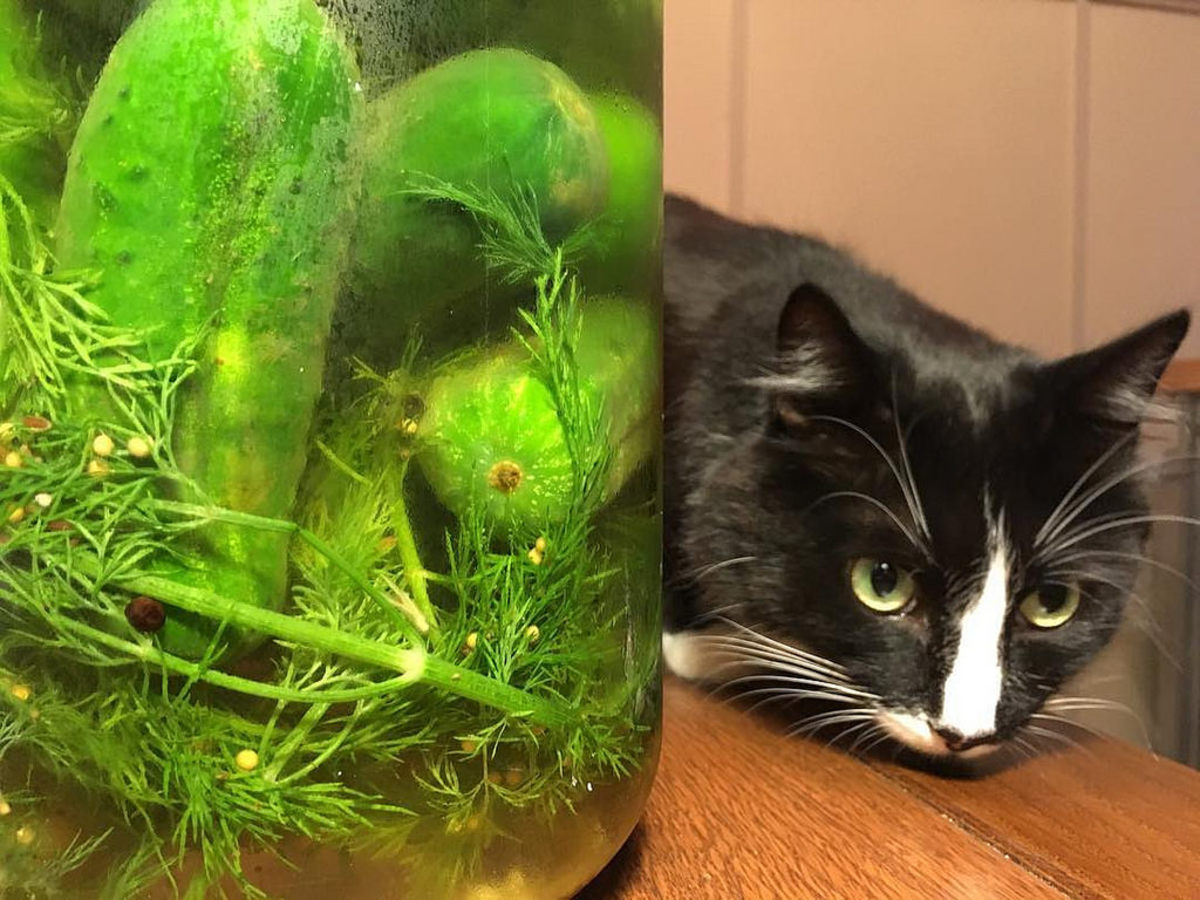 why-are-cats-afraid-of-cucumbers