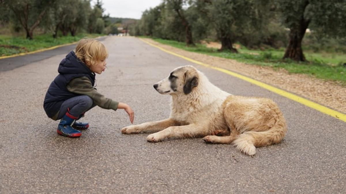 how-to-care-for-your-dog-8-tips-thatll-make-your-dog-a-happy-healthy-dog