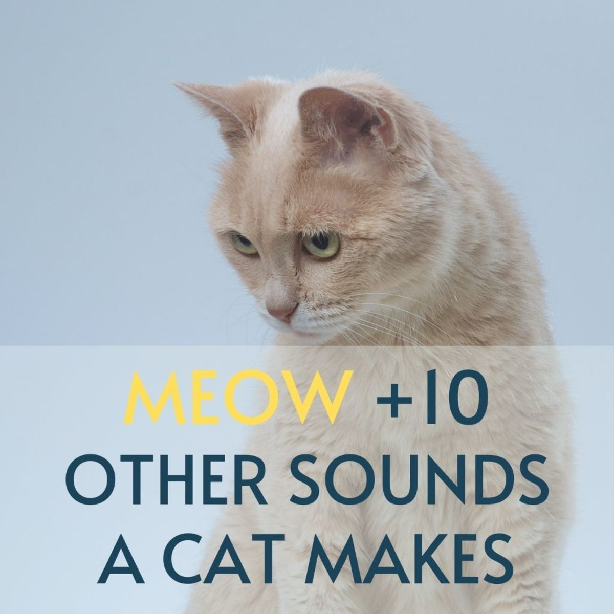 Understanding Cat Language: Meow and 10 Other Sounds Explained