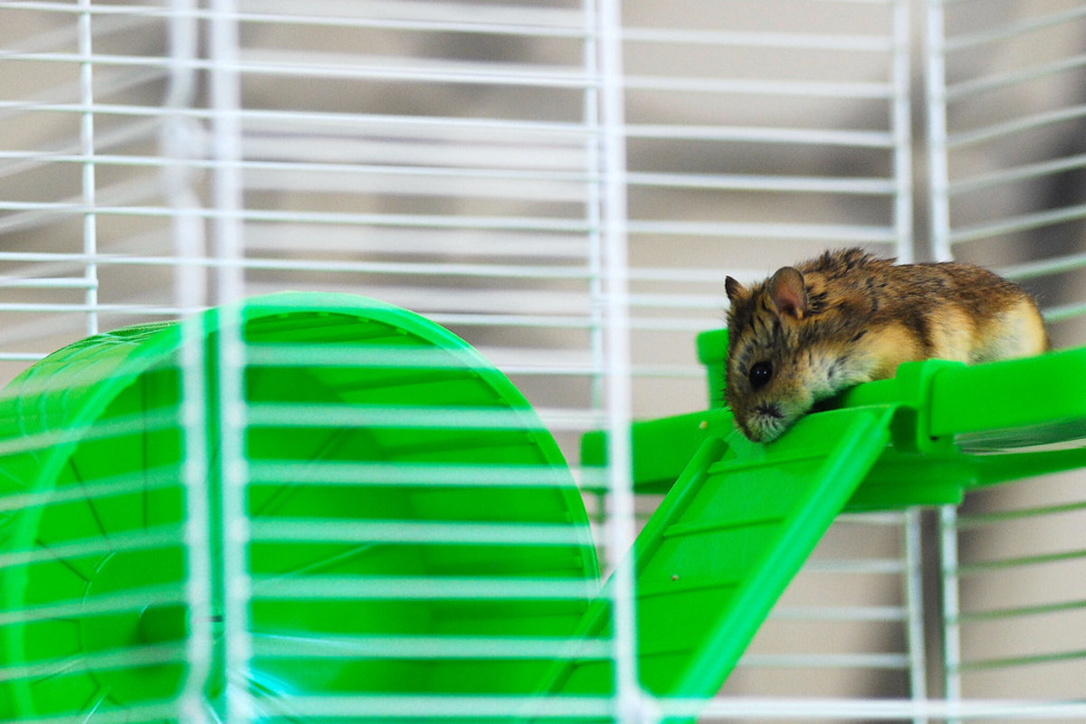 The Best Affordable Hamster Cages (2021 List)