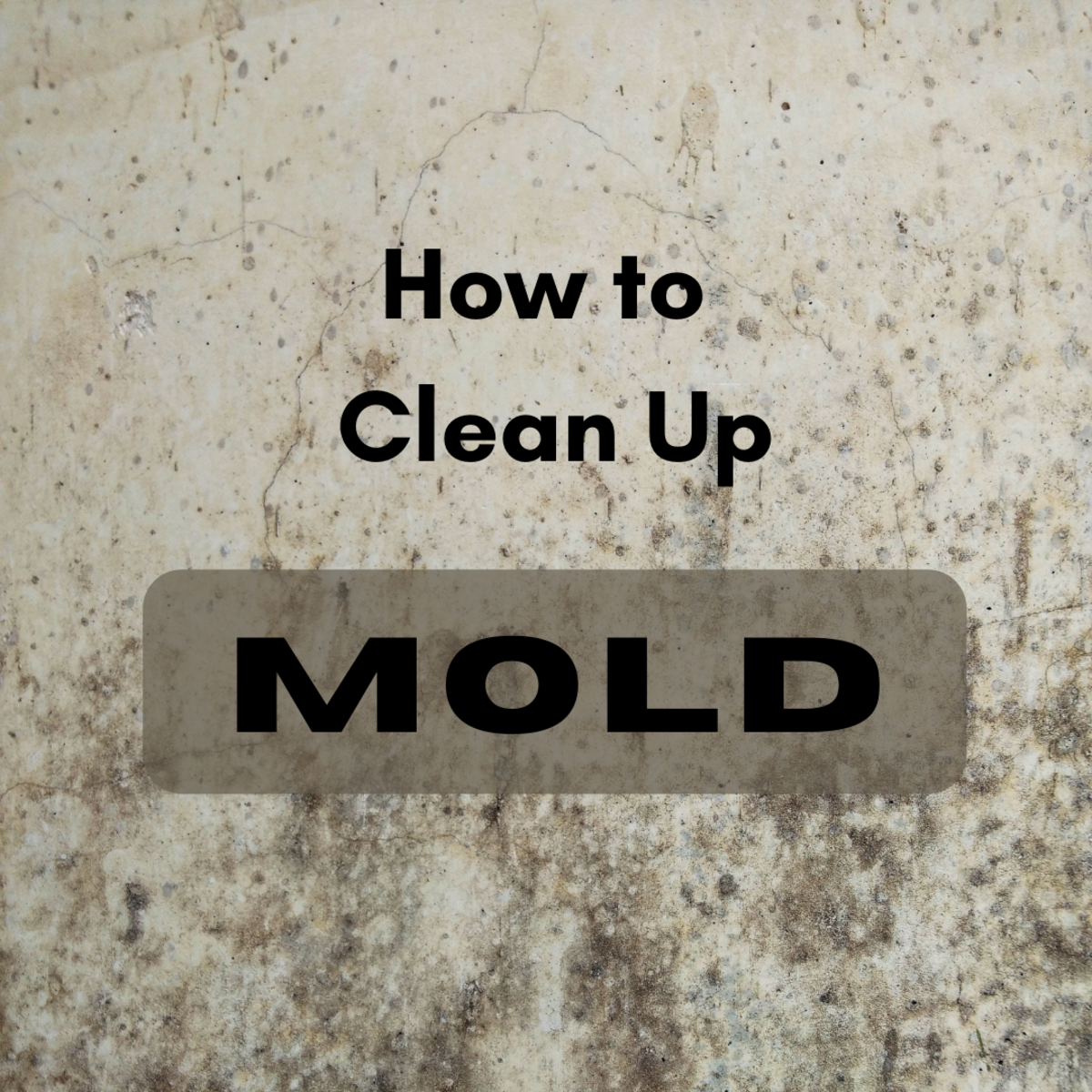 Learn when to call a mold professional, and when you can safely do it yourself.