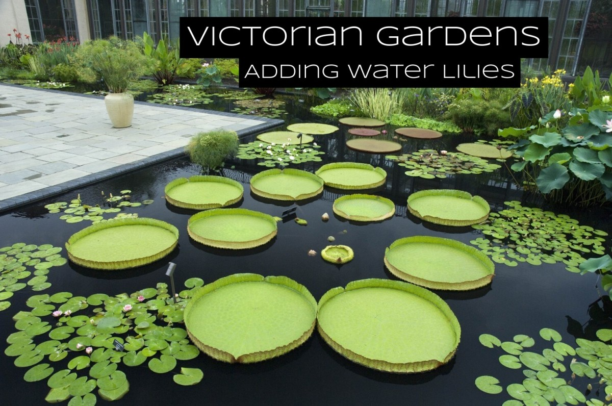Water lilies in ponds became popular during the Victorian Era.