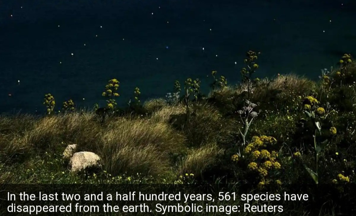 600 Species of Trees Have Disappeared From the Earth.