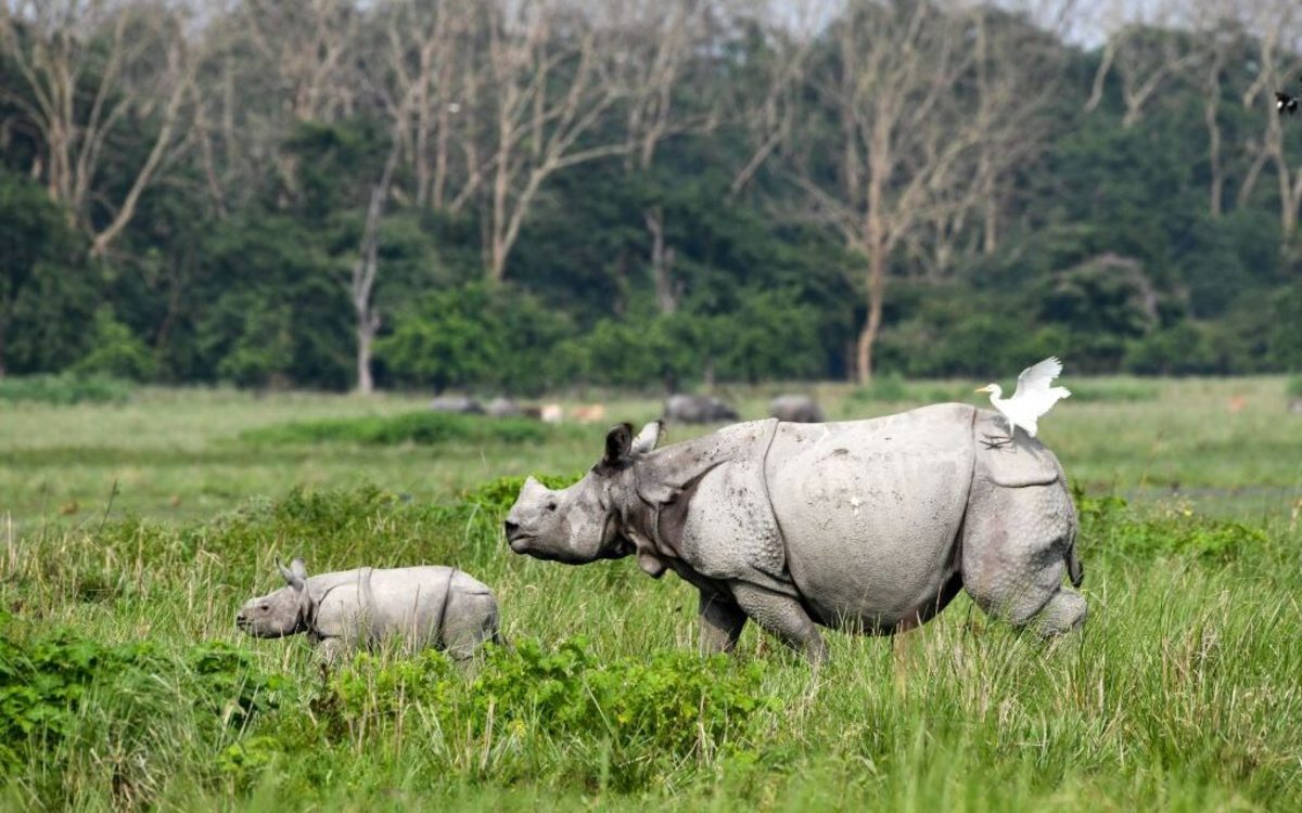 The Probitora wildlife sanctuary is home to the majestic one-horned rhinoceros, wild boars, and many other wildlife species.