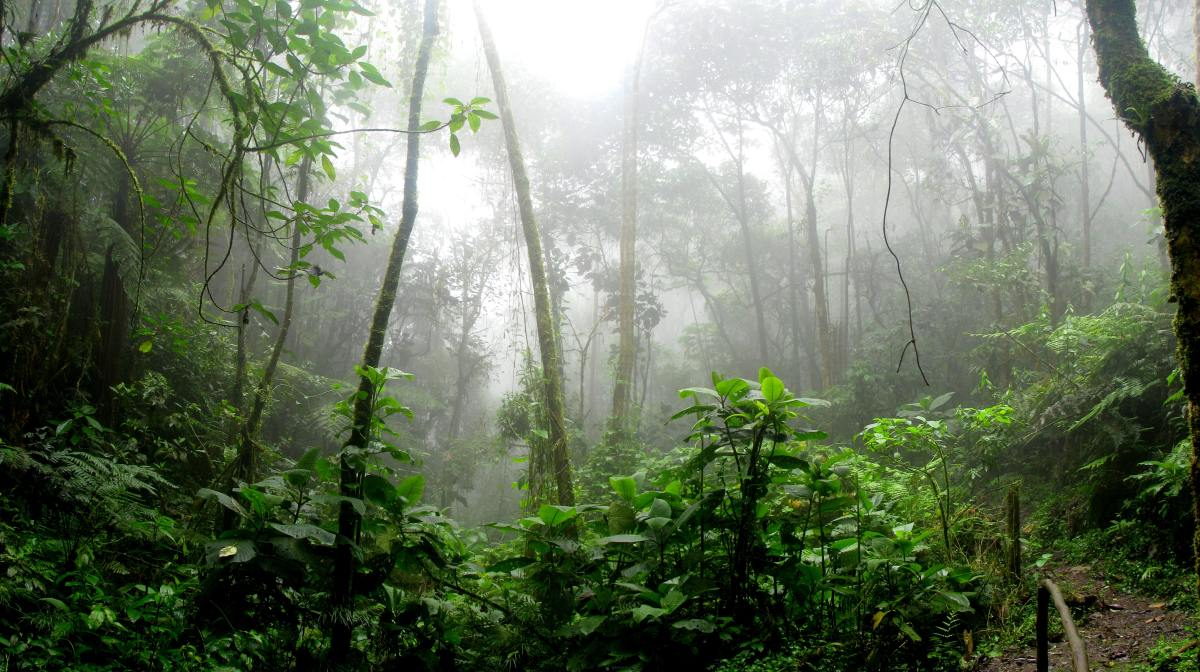 The Causes and Effects of Acid Rain