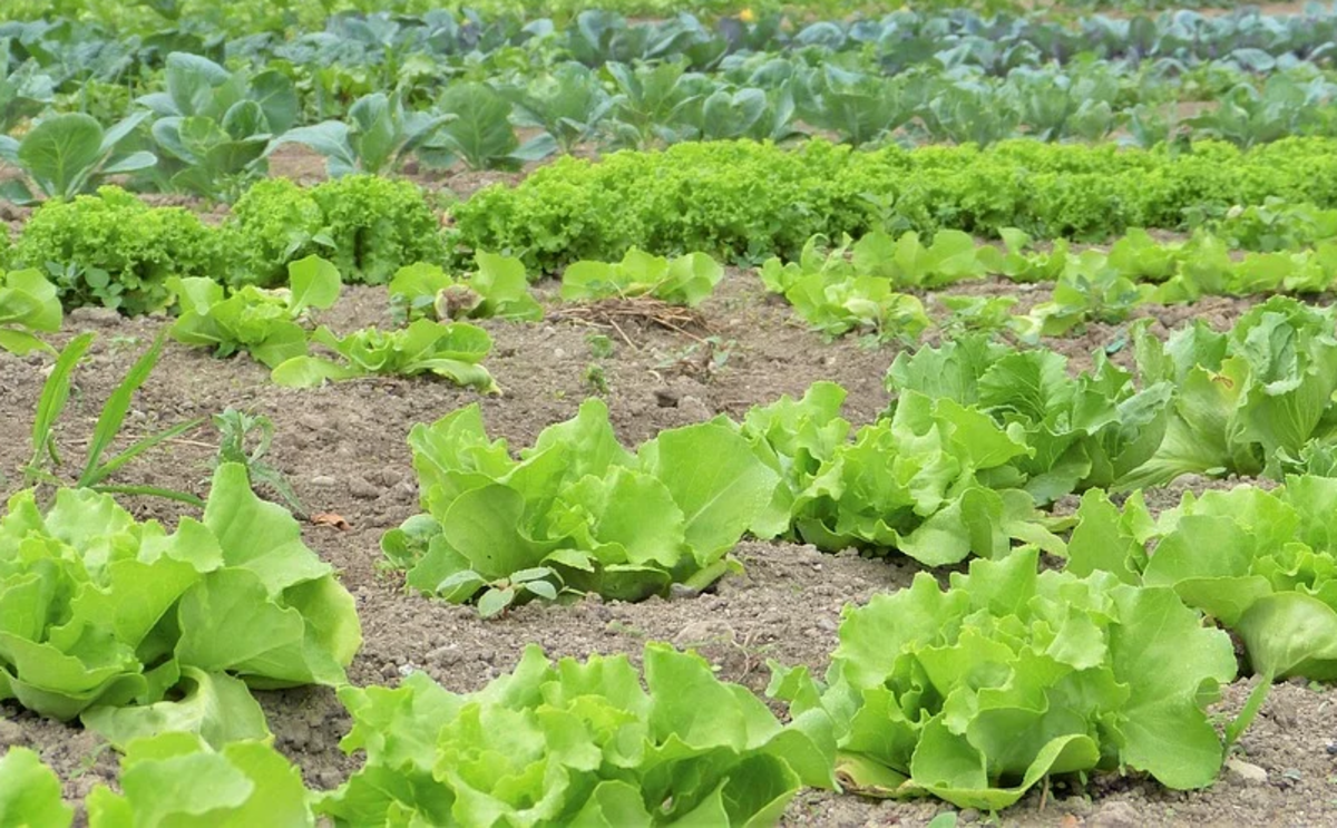 do-it-yourself-garden-pest-control