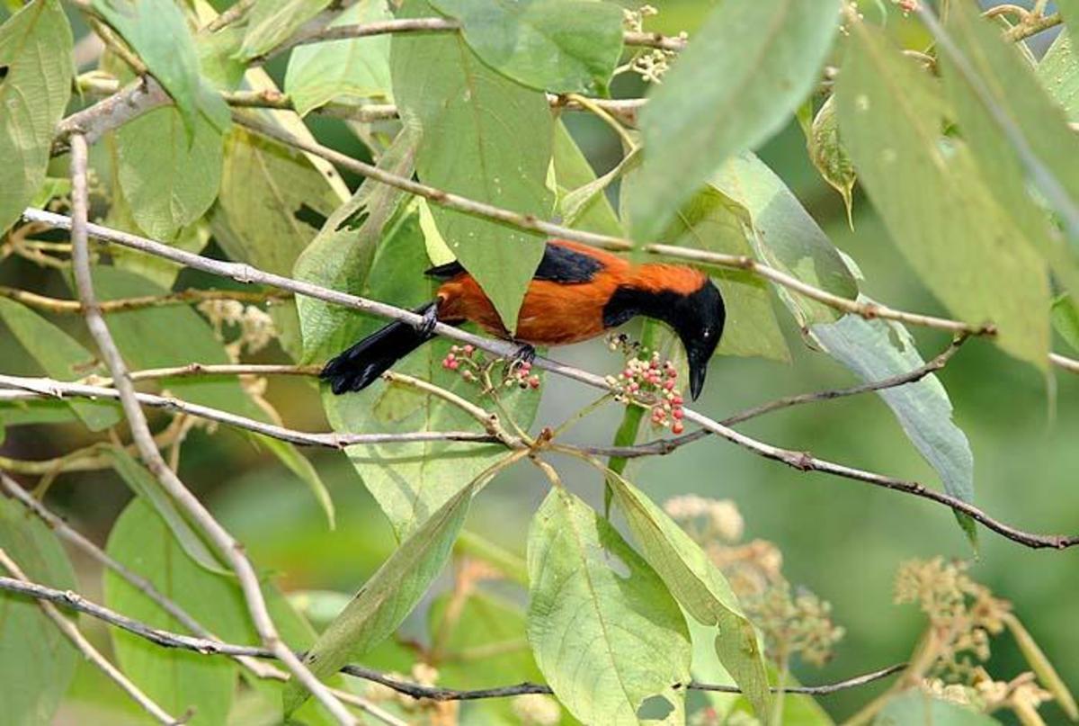 Poisonous Birds