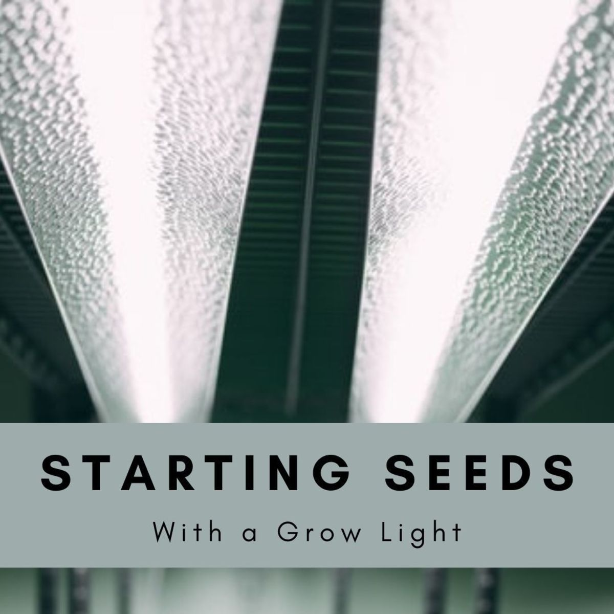 Starting them from seed is a great choice, but it's super hard without an LED or at least some form grow light.