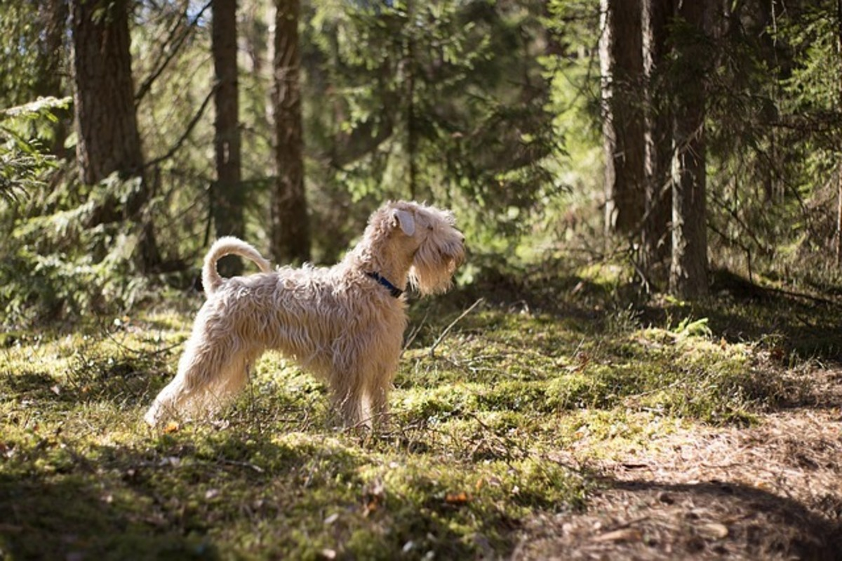 Dog outside in forest