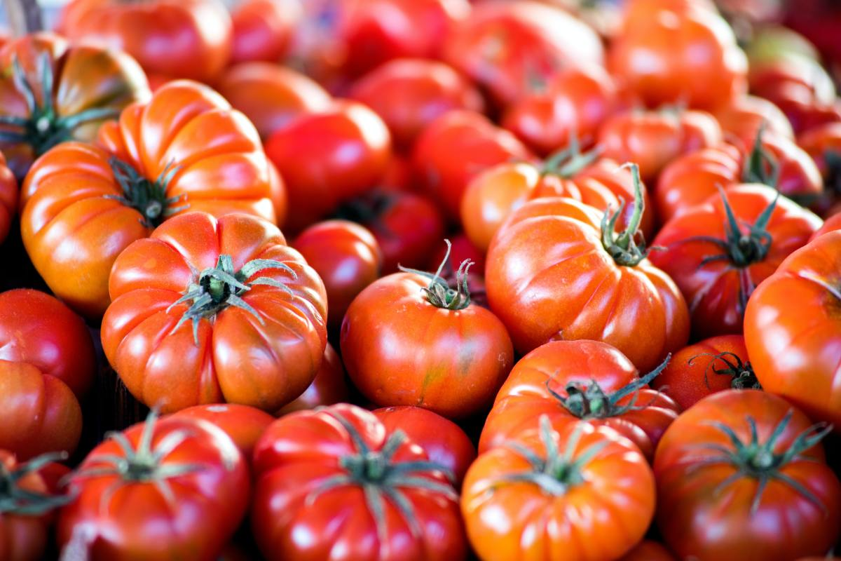 Seeds from heirloom tomatoes can be collected and planted to yield more tomatoes with the same characteristics.
