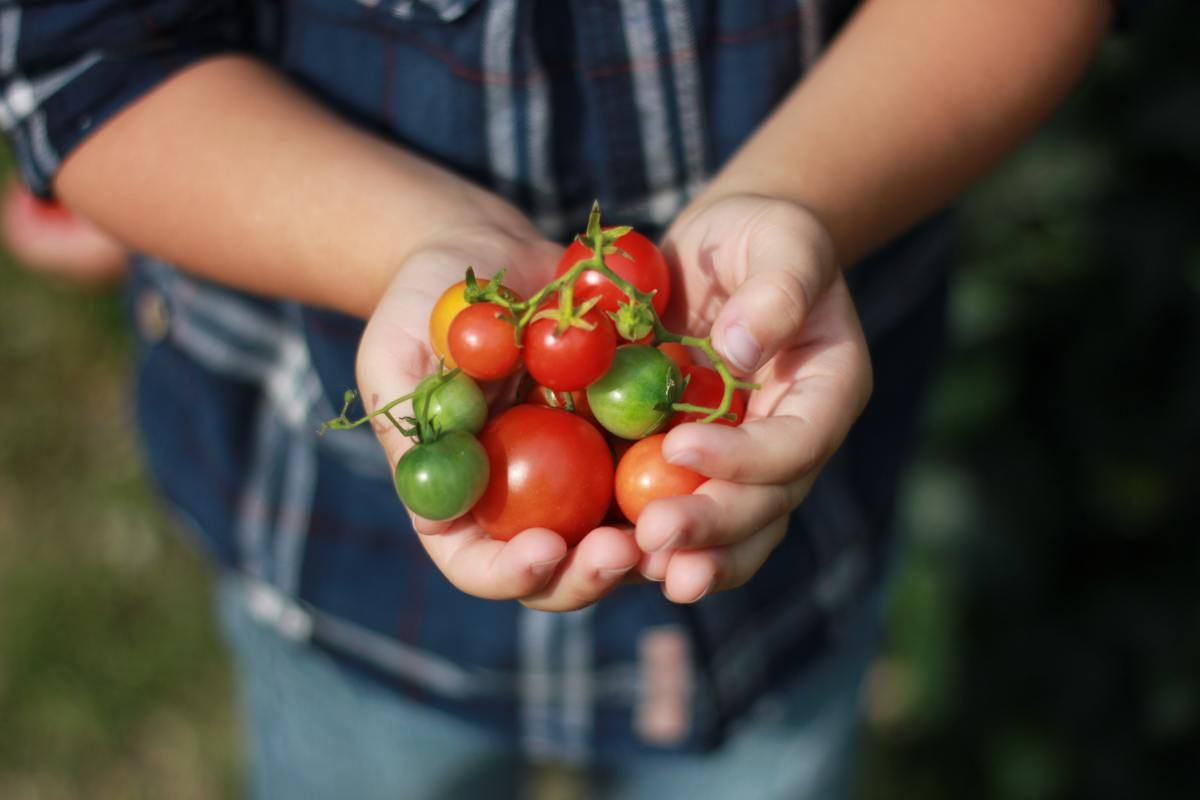 With over 3,600 tomato varieties to choose from, finding the right one for you can feel a bit daunting. Here are 6 tips to help you pick your perfect tomato.