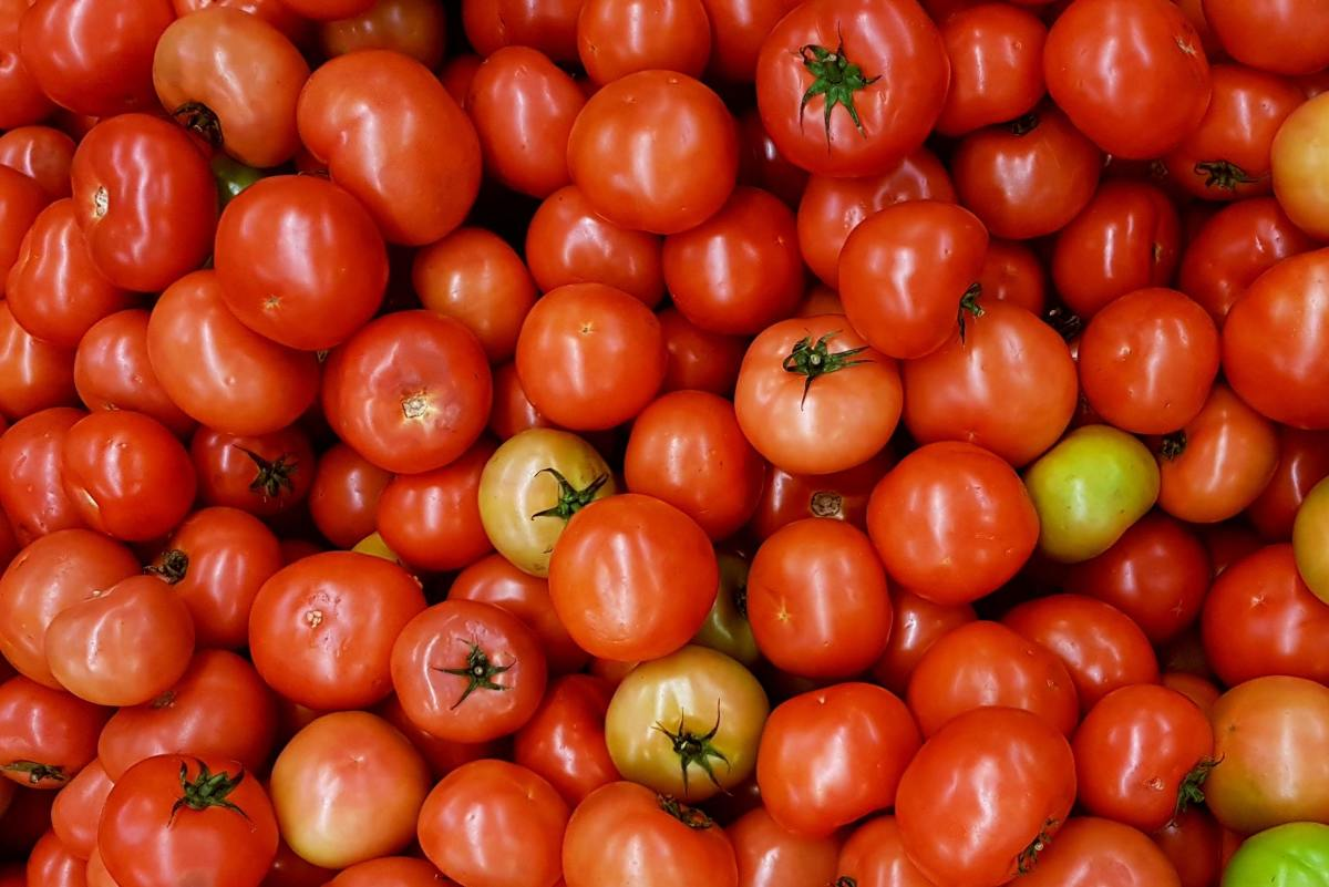 Determinate tomato plants will produce heaps of tomatoes all at once, which may be overwhelming if you aren't planning on canning.