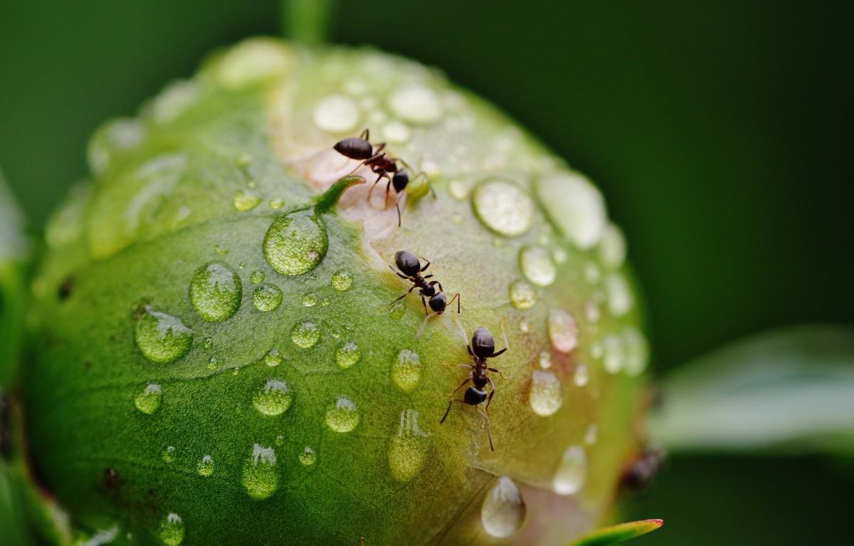 Ants crawling.