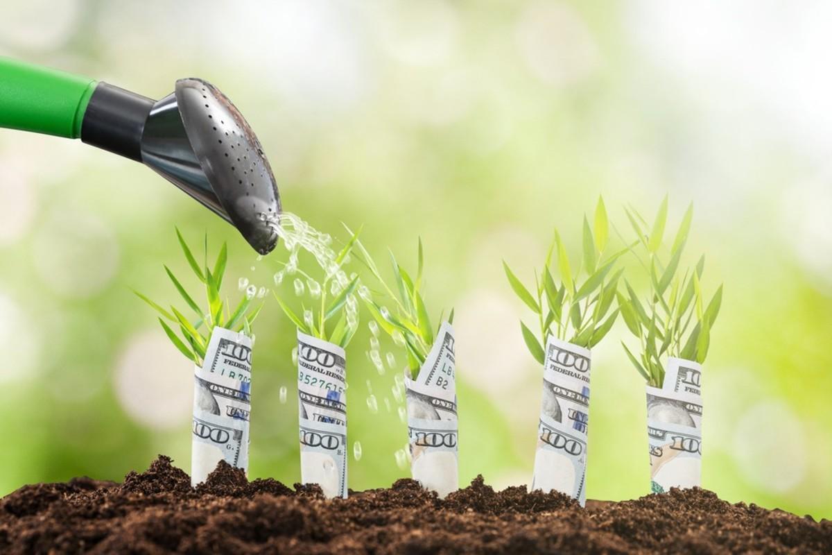 garden-seeds-getting-your-monies-worth