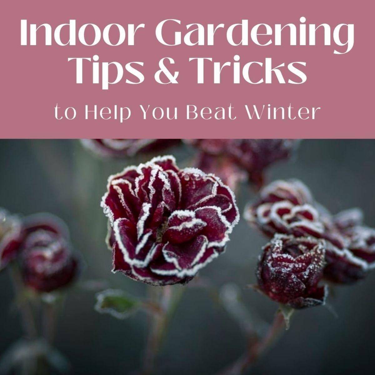 Beat Winter With an Indoor Garden