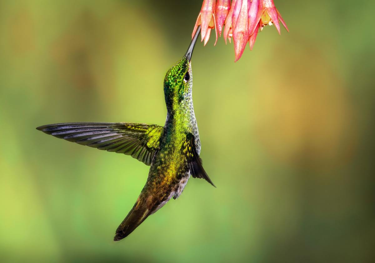 Plants that have native red or orange tubular flowers are attractive to hummingbirds.