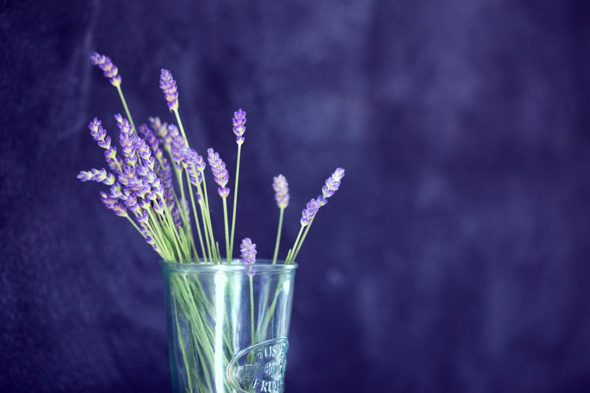 Beyond insomnia, lavender helps with joint pain and headaches!