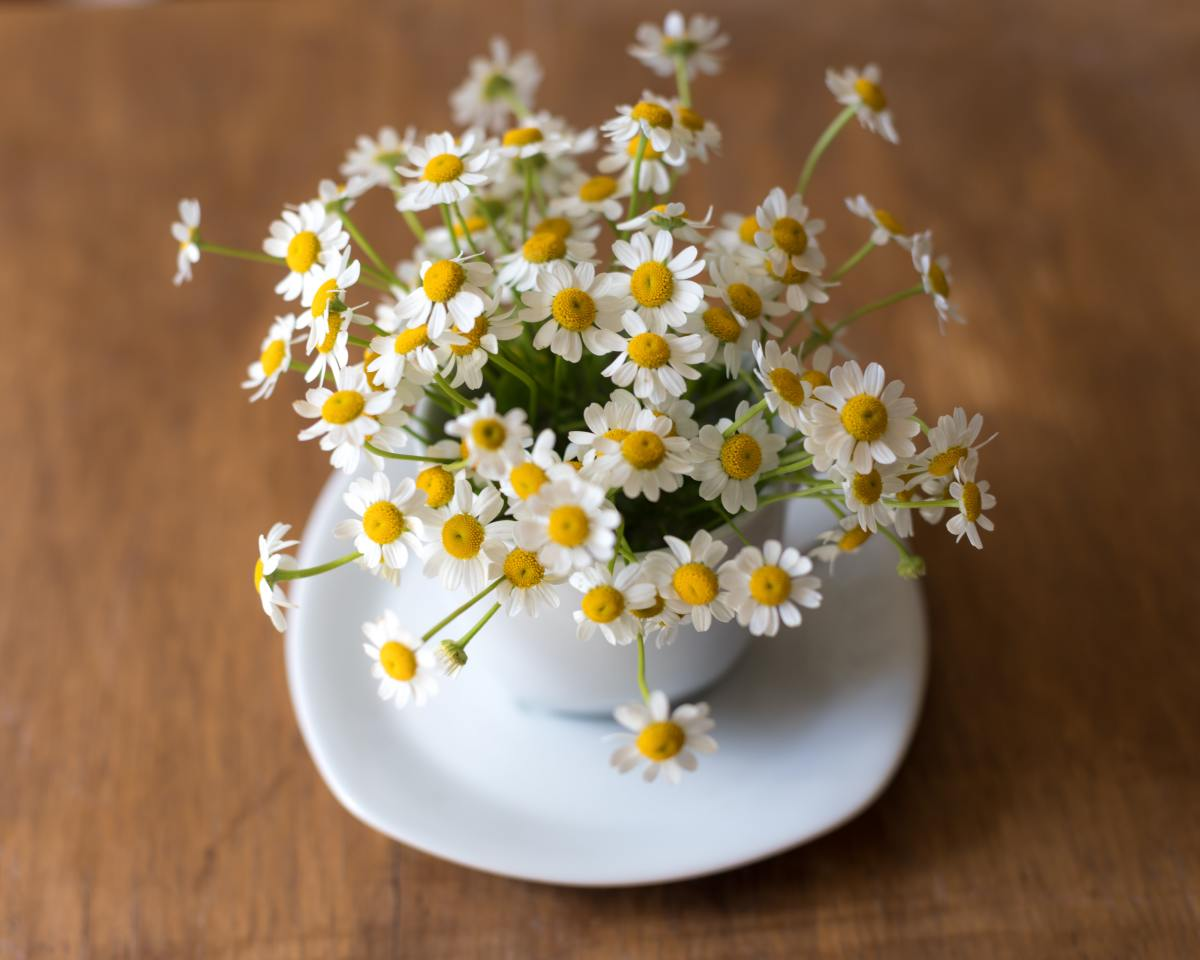 Chamomile is commonly used as a sleep aid in tea.
