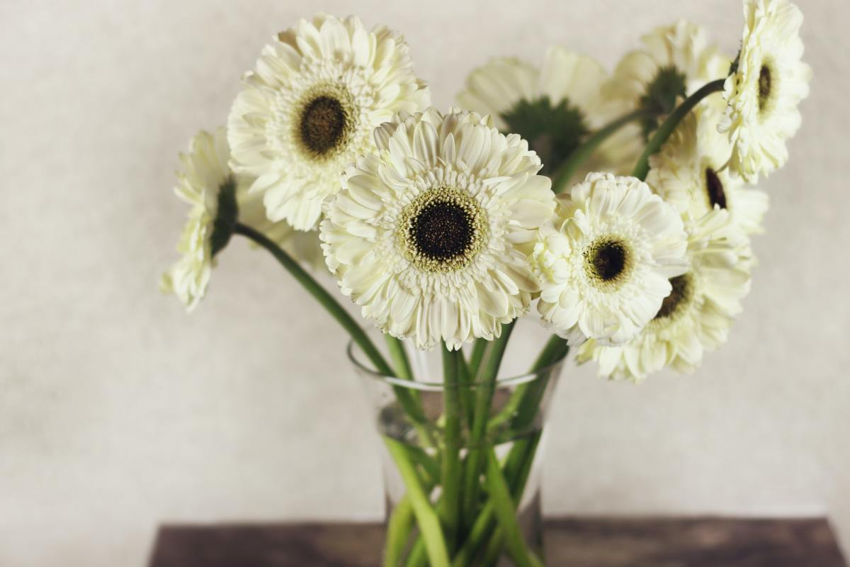 Gerbera daisies release oxygen at night to help you sleep.