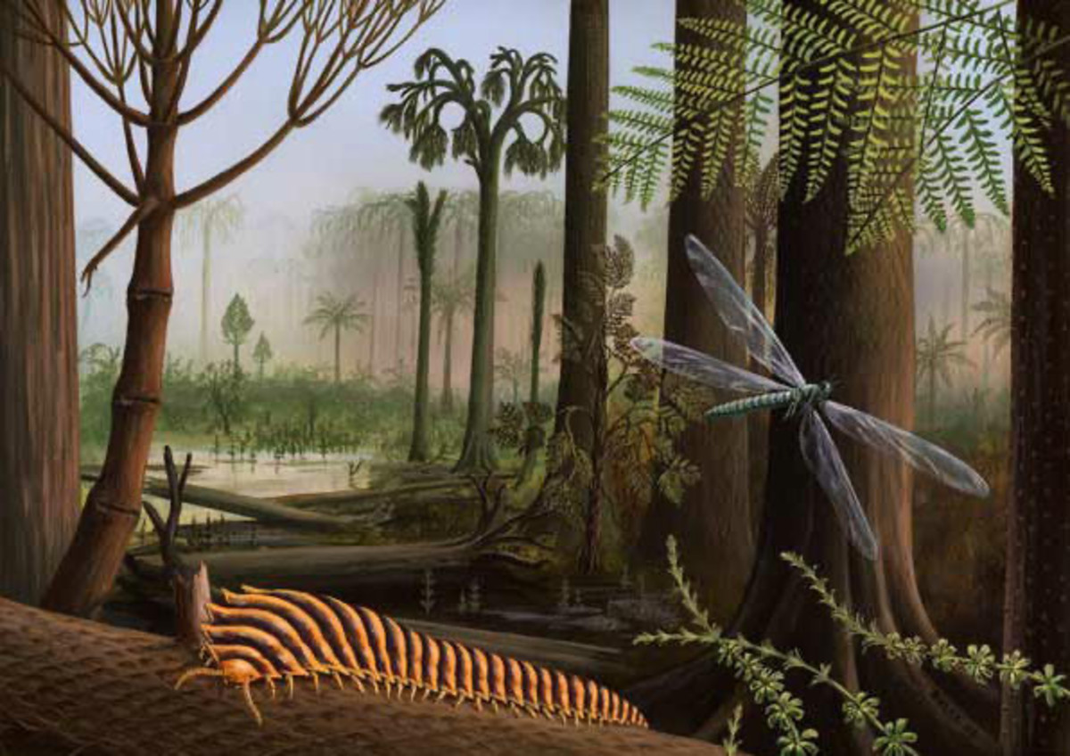 the-carboniferous-period-when-giant-insects-ruled-the-land-and-sky