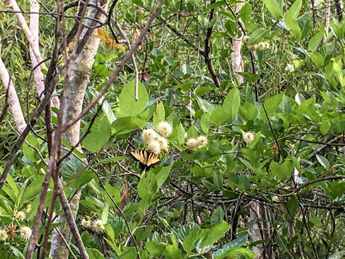 Peck  Lake Park, Hobe Sound, Florida